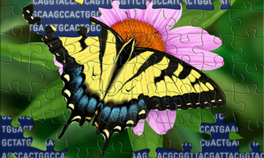 Illustration of Swallowtail Butterfly Puzzle Revealing Genetic Code