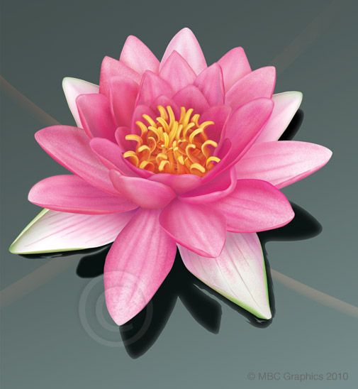 Illustration of Waterlily