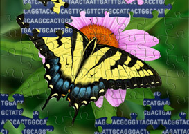 genetic studies of nature illustration