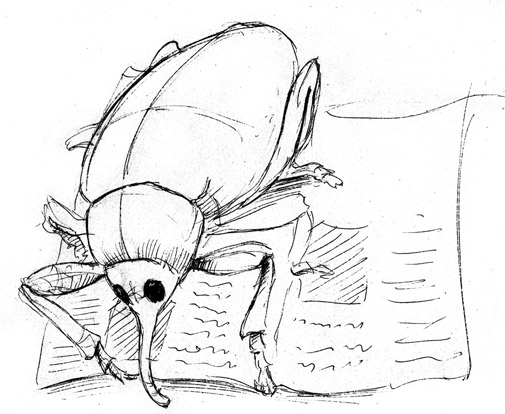 Cartoon Sketch of a Weevil Reading the Newspaper
